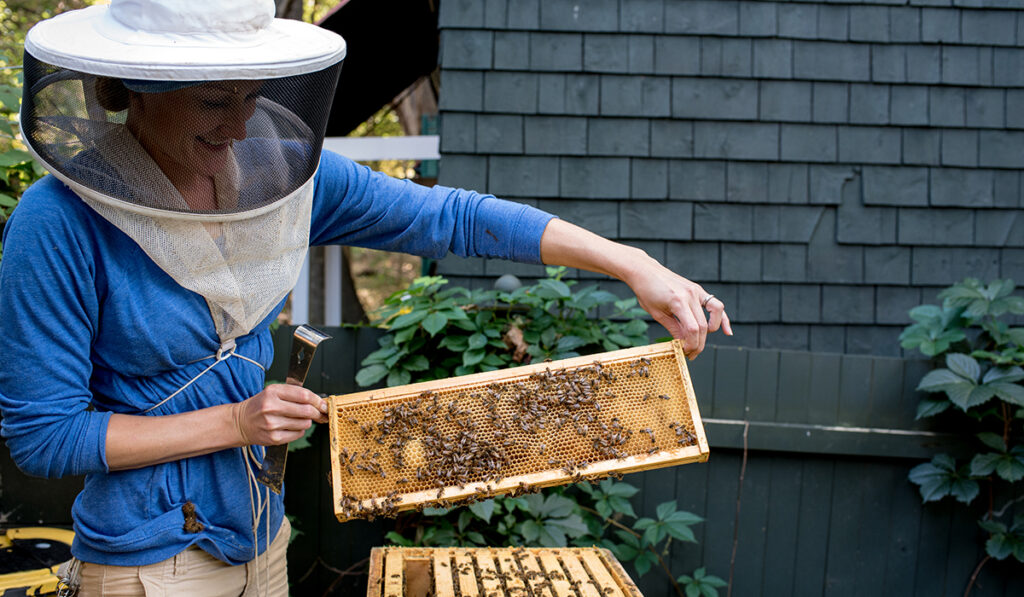 Dr. Kristin Wolf poses with bees in Champlain College's Apiary.