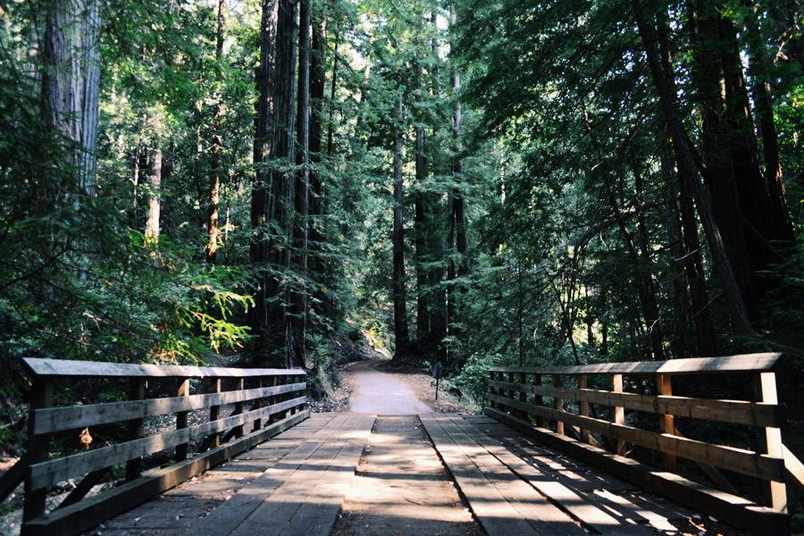 Let Us Hammock/Hike