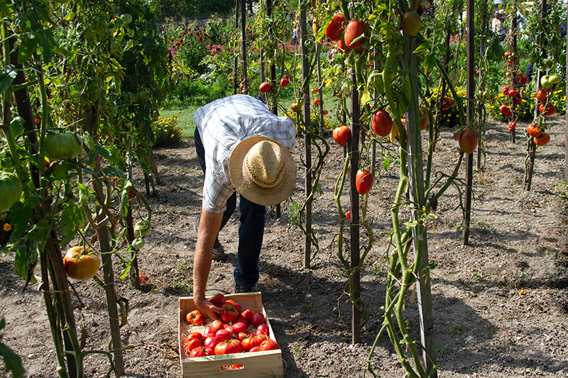 Gleaning for Food Rescue